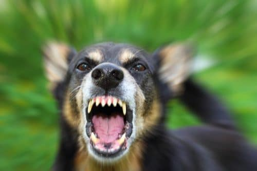 Understanding Liability and Recovery in California Dog Bite Accidents