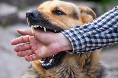 Recent Dog Bite Attack Showcases the Need for Pet Owners to Take Their Responsibilities Seriously